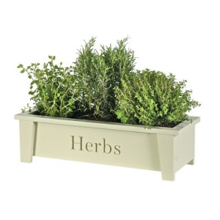 window_box_herbs_1
